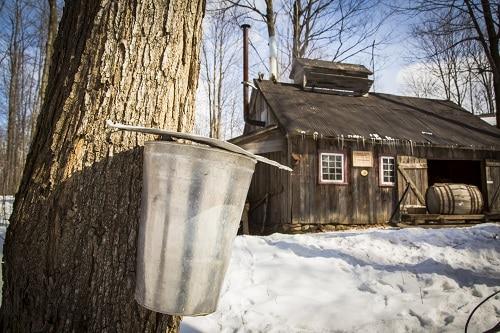Cabane à sucre en hiver